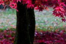 **Autumn**