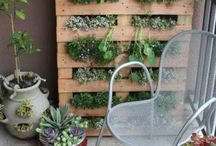 plantas para decoracion