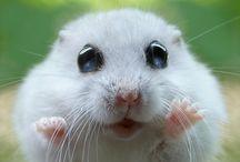Hamsters101