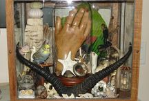 curiosities and oddities / by wild rose