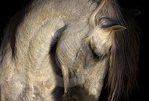 Beauty / by Mariah Keren