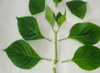Jardinage/plantes