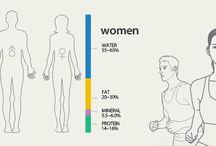 body ratio