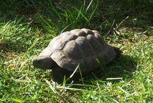 My Treasures / Griechische Landschildkröten
