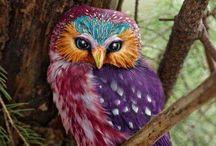 Owl / Eule / Bufnita