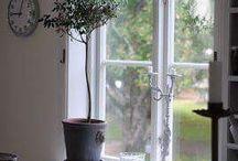 okno Izy