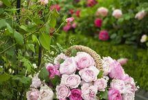 ruusut puutarha