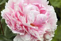 Tatouage avant bras / Bouquet fleur