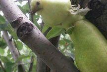 Garip görünüşlü sebze ve meyve