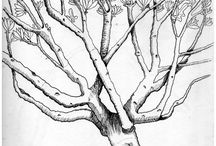Végétaux de Tahala, la cité des aigles / études sur des plantes imaginaires