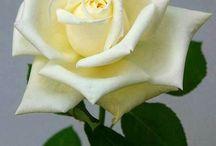 Flores tudo de bom ... !!!