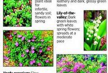 Ground cover plants - maanpeitekasvit