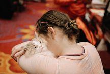 Cats / Kitty cats.