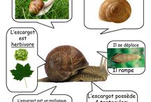 activite educatif sur la nature