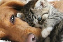 Animaux se cute