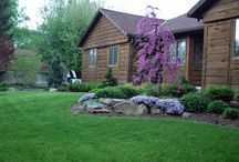 Our Work:  Deciduous Trees / Deciduous Trees in the Landscape