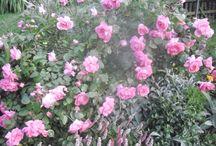 moje zahrada / zahrady
