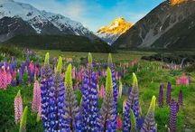 New Zealand inspiration