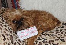 Pets and other cuties:) / Cute animals, funny pet shames...etc