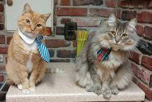 Cat Fashion / Dapper Felines