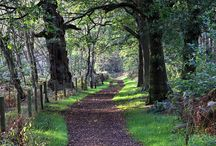 East Midlands / Population:4,5mill Robin Hood