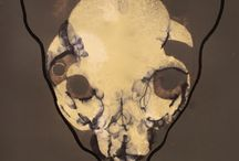 animals / animals skulls
