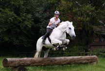 Schöne Pferde - nice horses / Hier sammeln wir emotionale und schöne Bilder rund ums Pferd