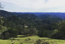 Armstrong Redwoods State Nature Reserve / by CA State Parks