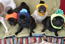Pugs?! / by Tiffany Baker