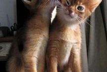 Cats! <3