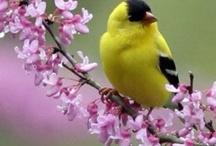 Back yard birds / by Sunshine Stitches