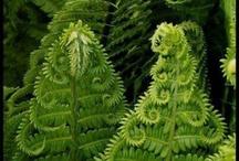 Plants etc. / by . E stepp N .