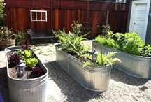 Gardening and Outdoors / by Lauren Fay
