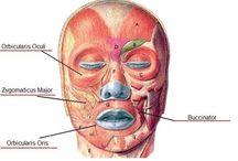 Let's Get Fit - Facial Exersises / by Barbara Ward