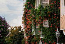 çiçekli evler
