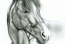 Paarden tekeningen