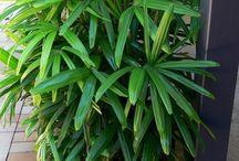 Tropical/Shade Tolerant Plants