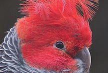 Interesting Birds