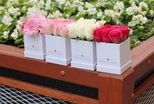 Poczta kwiatowa / Flower box