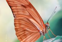 Wings To Fly / Beautiful butterflies, birds..anything with wings to fly / by Linda Miller-Favorite Things