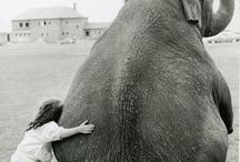 amámos los animales.