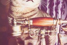 ♡ My cat ♡