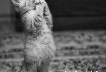 Kissojen viisauksia ❤