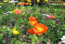 The Botanical Gardens of Villa Taranto / The Botanical Gardens of Villa Taranto