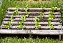 orto e giardino