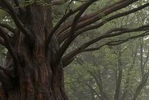 Tree! Arvore!
