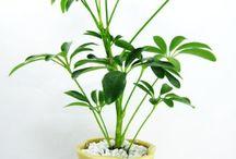 my plant friends