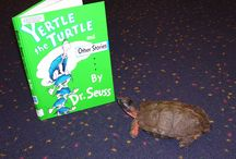 Oh the places you'll go... / Yertle's been all over the country. Here's some of the pictures from her travels.