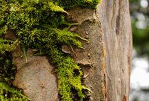 Naturel beauty / by Cheryl Jasso
