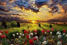 virágos tájkép